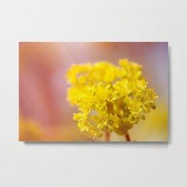 Acer inflorescence flowerets detail Metal Print