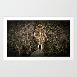 Western Burrowing Owl Art Print