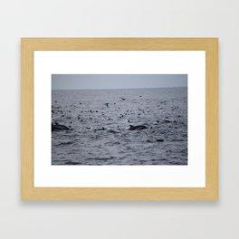 Dolphins & Birds Framed Art Print