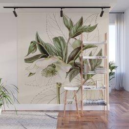 Helleborus orientalis Wall Mural