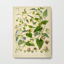 Blue And Yellow Himalayan Flowers Green Leaves Vintage Scientific Botanical Illustration Metal Print
