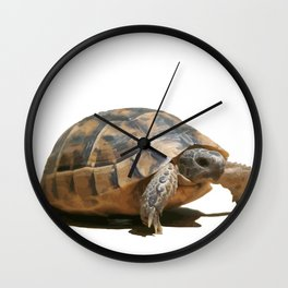 Portrait of a Young Wild Tortoise Isolated Wall Clock