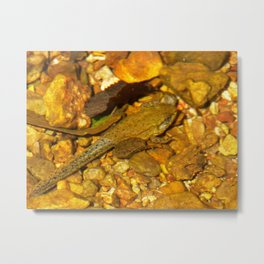 incomplete metamorphosis Metal Print