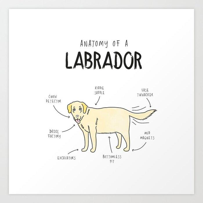 Anatomy of a Labrador Art Print by shawnchen | Society6