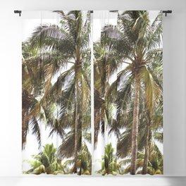 Miami Palm Trees   Landscape Photography   Coastal   Nature   Ocean   Summer   Travel Blackout Curtain