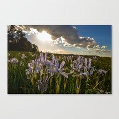Mountain Flower Brilliance Canvas Print