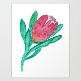 Pink Watercolour Protea Painting Art Print