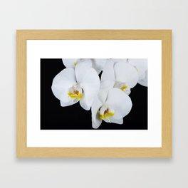 Night Orchid Framed Art Print