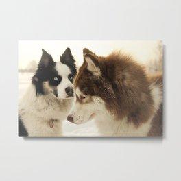 Husky dogs Metal Print