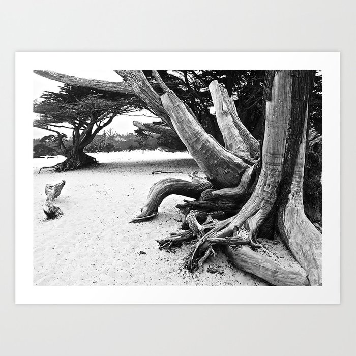Cypress I Art Print