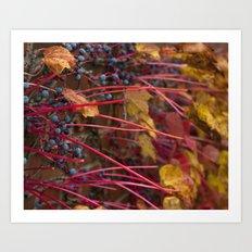 Berries and Leaves Art Print