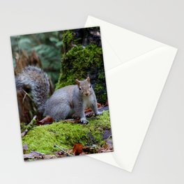 Squirrel2 Stationery Cards
