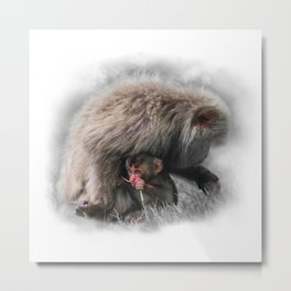 Baby Snow Monkey Metal Print