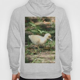 Baby Duckling strolling on a lawn Hoody