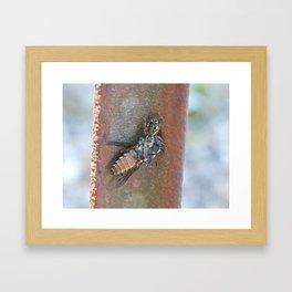 spider and horsefly Framed Art Print
