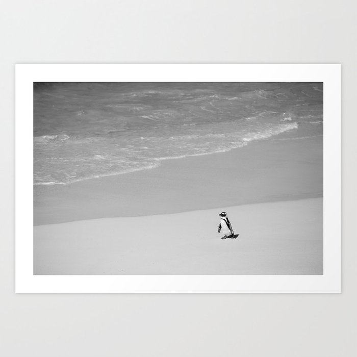 Lone African Penguin walking on beach Art Print