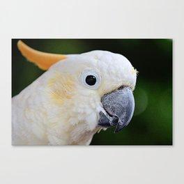 Citron-Crested Cockatoo Canvas Print