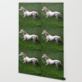BEAUTIFUL WHITE HORSE Wallpaper