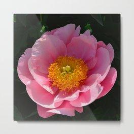 Light Pink Peony by Teresa Thompson Metal Print