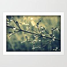 morning drops Art Print