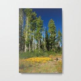 High Country Aspen Metal Print