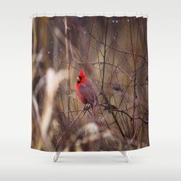 Cardinal - Bright Red Male Bird Rests in Raindrops Shower Curtain