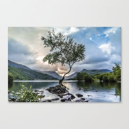 The Lone Tree Canvas Print