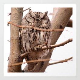 Wild Owl - Ivins, Utah Art Print