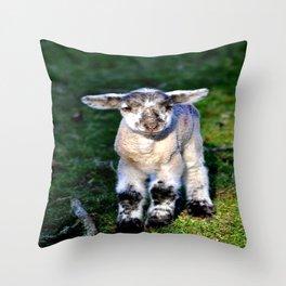 Exmoor Lamb Throw Pillow
