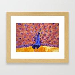 Peacock Poetry Framed Art Print