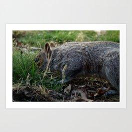 Nosy squirrel. Art Print