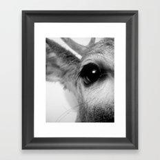 DEER II Framed Art Print