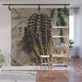 Chin Cactus Wall Mural
