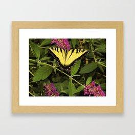 Monarch Tiger Swallowtail Butterfly Framed Art Print