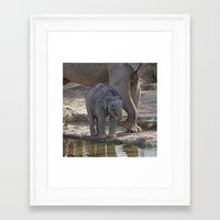baby elephant Framed Art Prints featuring Elephant Baby by MehrFarbeimLeben
