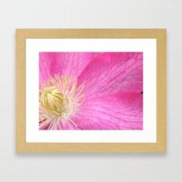 Pink Clematis Framed Art Print