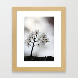 Almond blossoms in miniature Framed Art Print