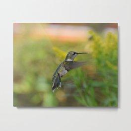 Hovering hummingbird 1 Metal Print