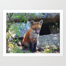 fox 2018-9 Art Print