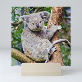 Australian Koala Bear Photo Mini Art Print