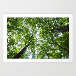 Up Through The Trees Art Print