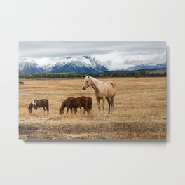 Mountain Horse - Western Style in the Grand Tetons Metal Print