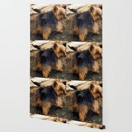 Cute Little Yorkie   - Yorkshire Terrier Dog Wallpaper
