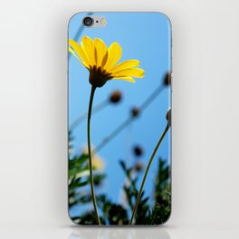 Morning Sunlight iPhone Skin