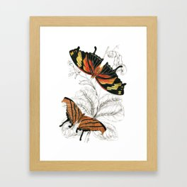 Scientific Colorful Butterfly Entomology Drawing Framed Art Print