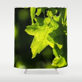 May sunshine in the tree leaf Shower Curtain