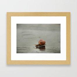 Caracol II Framed Art Print