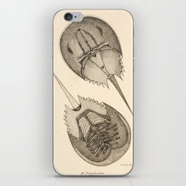 Horseshoe Crabs iPhone Skin