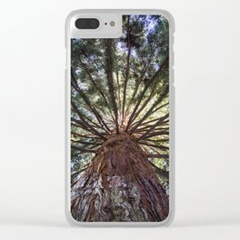 Beautiful Trees / 3 Clear iPhone Case
