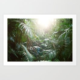 The Daintree Rainforest Art Print